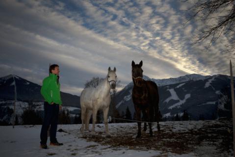 Horses on  Brandstaetterhof Pichl-Reiteralm