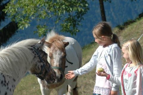 unsere zwei Ponys Straciatella und Karamella