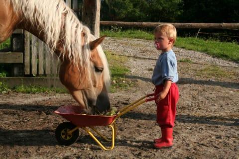 Evita the horse