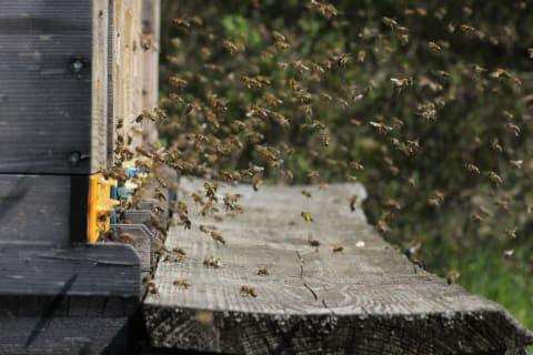Zum alten Forsthaus - bei den Bienen