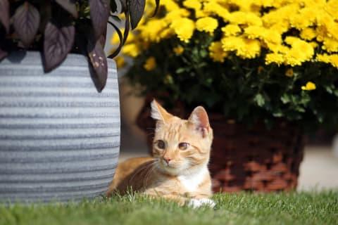Haus am See - Katze im Garten