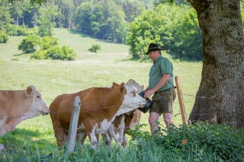 Viehnachschauen