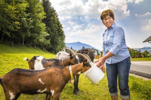 beim Ziegenfüttern
