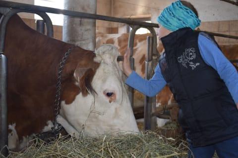 Bauernhofalltag erleben