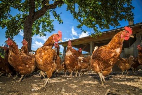 Vom Leitenhof bekommt man auch Eier, frische Kuhmilch und man kann täglich Gebäck bestellen.