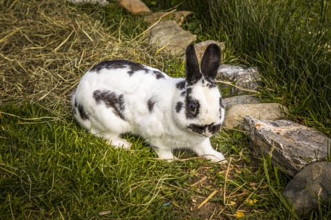 Unser Hase Hupsi