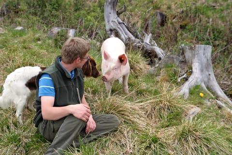 Unser Almschwein