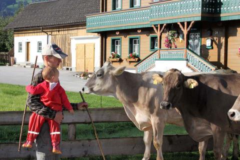 Kühe auf die Weide bringen Linharterhof