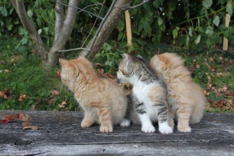 Neugierige Babykatzen
