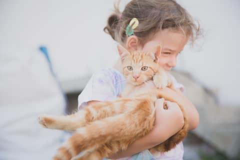 Unsere Katze Luise - der Liebling am Hof