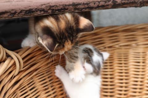 Baby Kätzchen