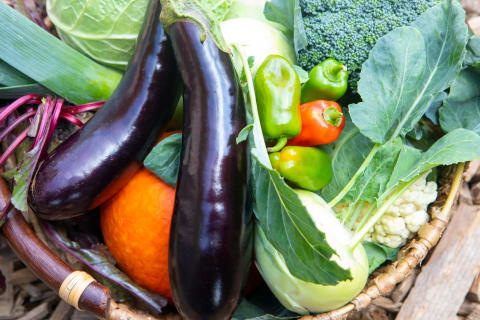 Gemüse (Foto: Klaus Hartinger, VN)