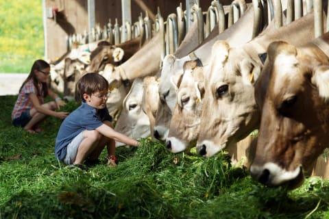Kinder beim Füttern der Kühe