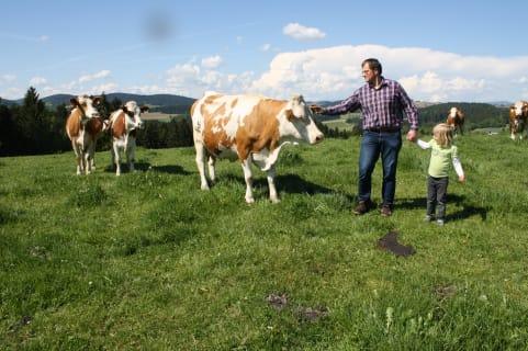 Kühe auf der Weide Biohof Stadler