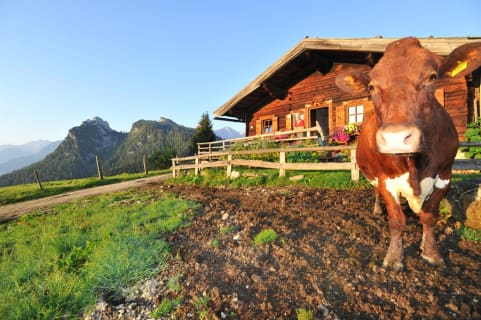 Unsere Götzalm, wo unsere Kühe Urlaub machen