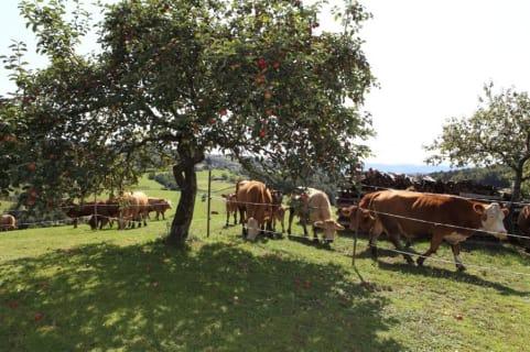 Den Sommer verbringen unsere Kühe natürlich auf der Weide