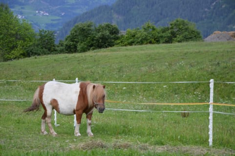 Pony Elli