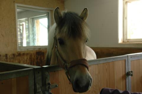 im Pferdestall