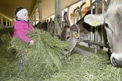 Groß und Klein sind dazu eingeladen die Kühe zu füttern. Ganz ohne Gefahr. Urlaub am Bauernhof pur.