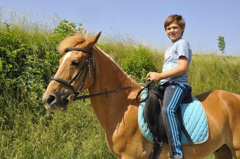 Pferd Haberlehof