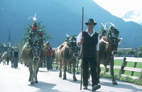 Cattle driving festival