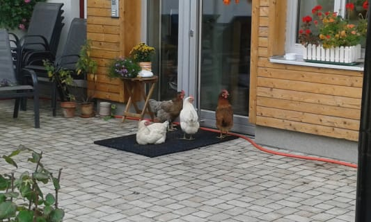 LUNZFerien - Hühner