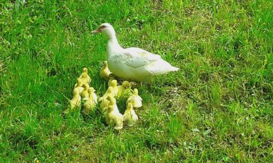 Ferienwohnung Familie Reisenbichler - Hühner