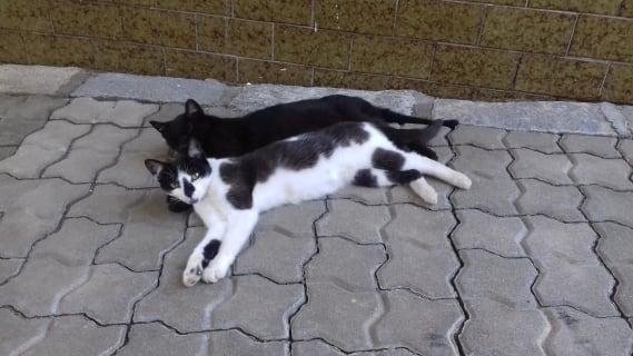 Katzen am Hof