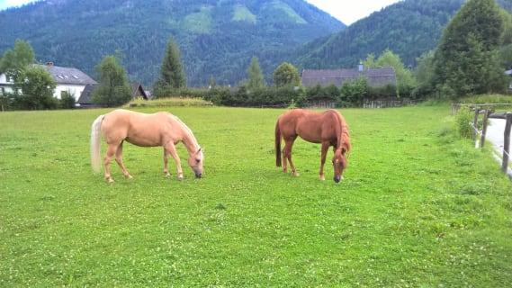 Ferienwohnung Schlögelhofer -Pferde
