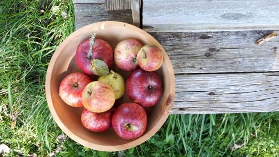 Obst direkt aus dem Garten schmeckt am besten!