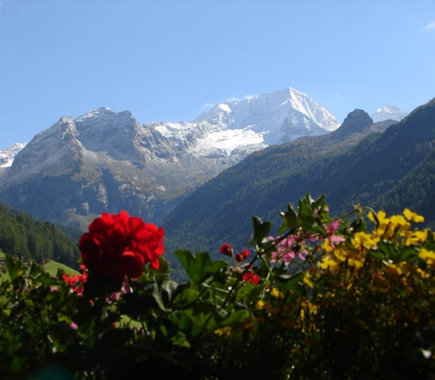 Spätsommer in Südtirol mit Almabtrieb
