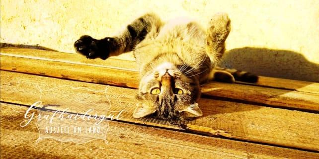 Grafhaidergut- Katze am Holz