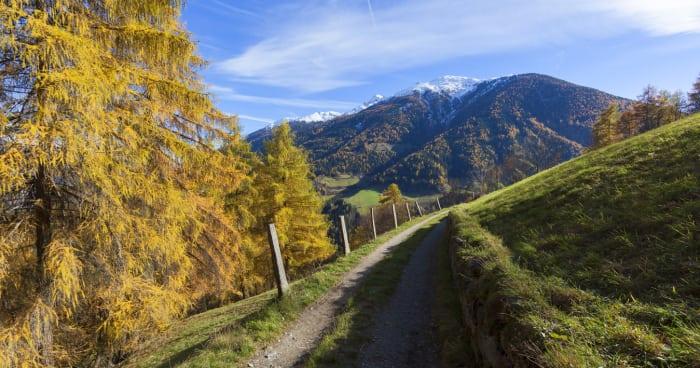 Settimane dell'autunno dorato