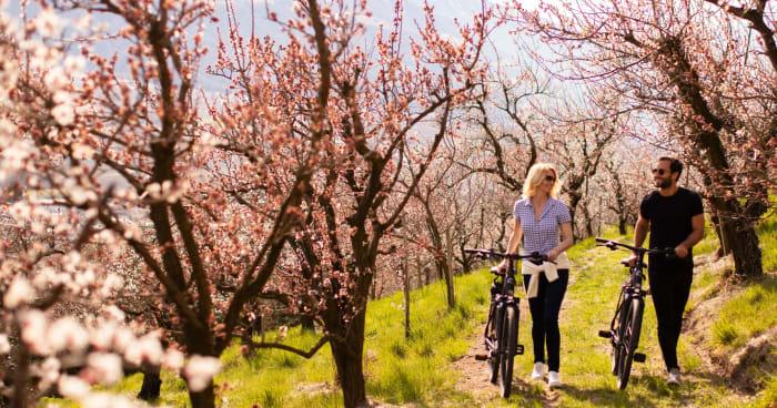 E-Bike Blütentage