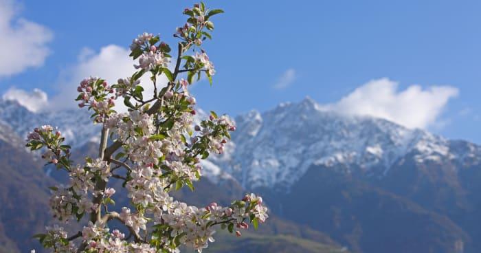 Risveglio di primavera (4 = 3)