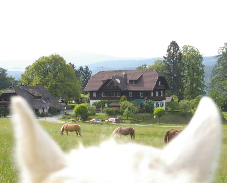 animalischer Blick zum Hof