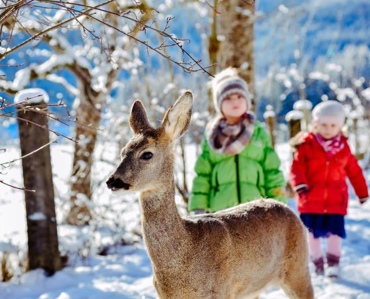 Bambi  mit Kindern