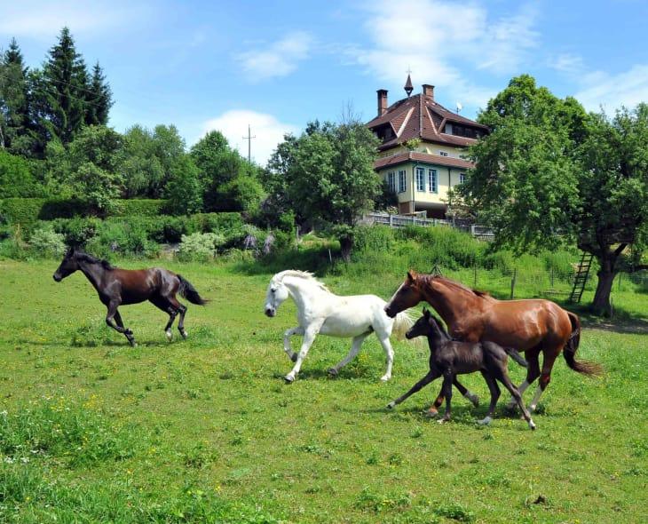 Ferienhof Haberzettl