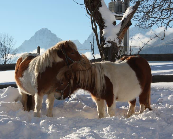 Kuschelige Wintergrüße von Sissy & Suki