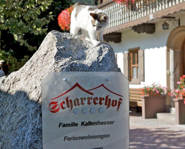 Katze Kinderbauernhof Scharrerhof