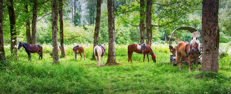 Pony-Western Tour