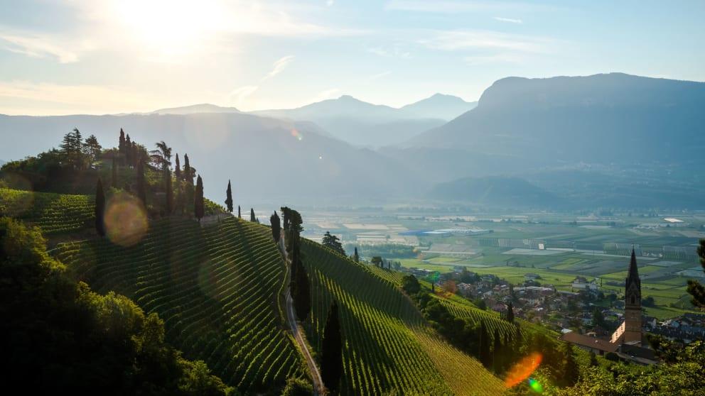 Wine-walk week at Termeno