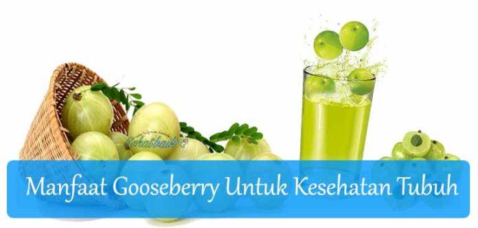 16 Manfaat Kesehatan yang Luar Biasa dari Buah Gooseberry