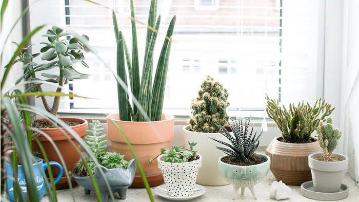 5 Keuntungan saat memelihara tanaman di dalam ruangan