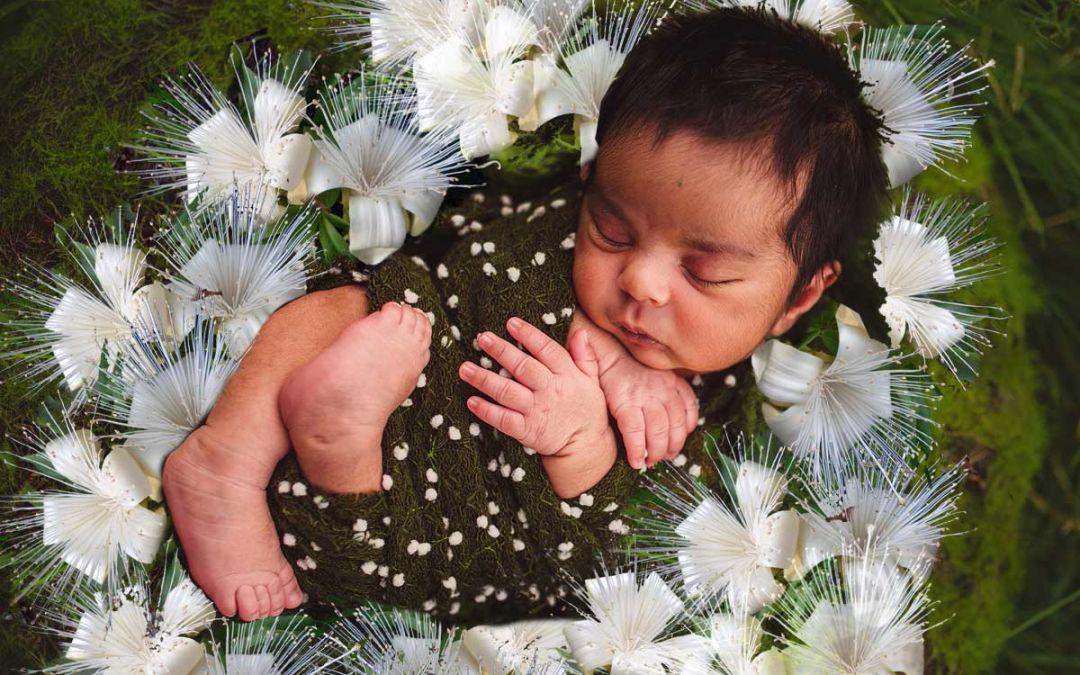 Boab: il Fiore australiano che ti libera dagli schemi negativi degli antenati