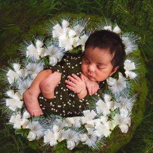 Boab è il fiore australiano che libera dai condizionamenti famigliari e dagli schemi negativi degli antenati - Consulenza Fiori Australiani a Torino
