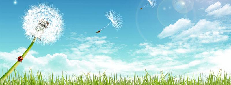 I Fiori di Bach e Fiori Australiani possono aiutare ed essere un aiuto ad alleviare i fastidi dell allergia, sia al polline da fieno che altri tipi di allergie.