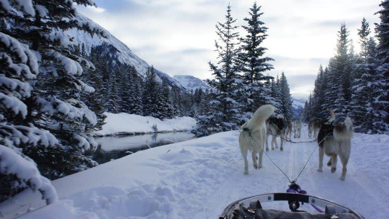 10 endroitspour faire du traîneau à chiens au Québec