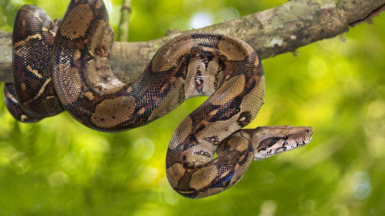 Le dernier des serpents