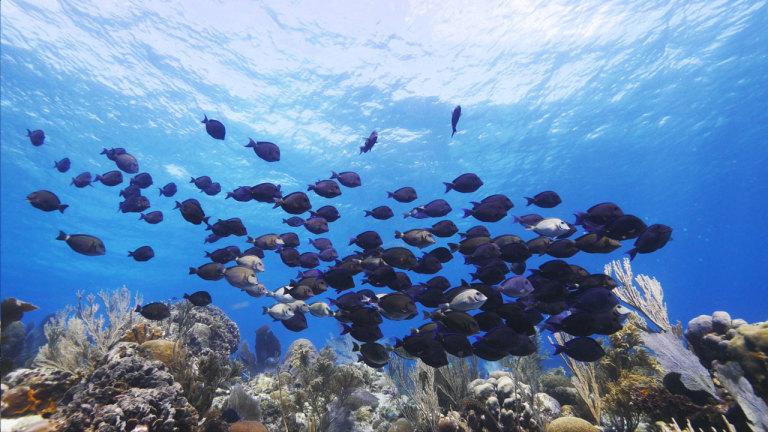 L'île de Roatan, havre de beautés marines